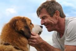 """A Dog's Purpose"" Premiere Cancelled After Leak Of Animal Abuse Footage"